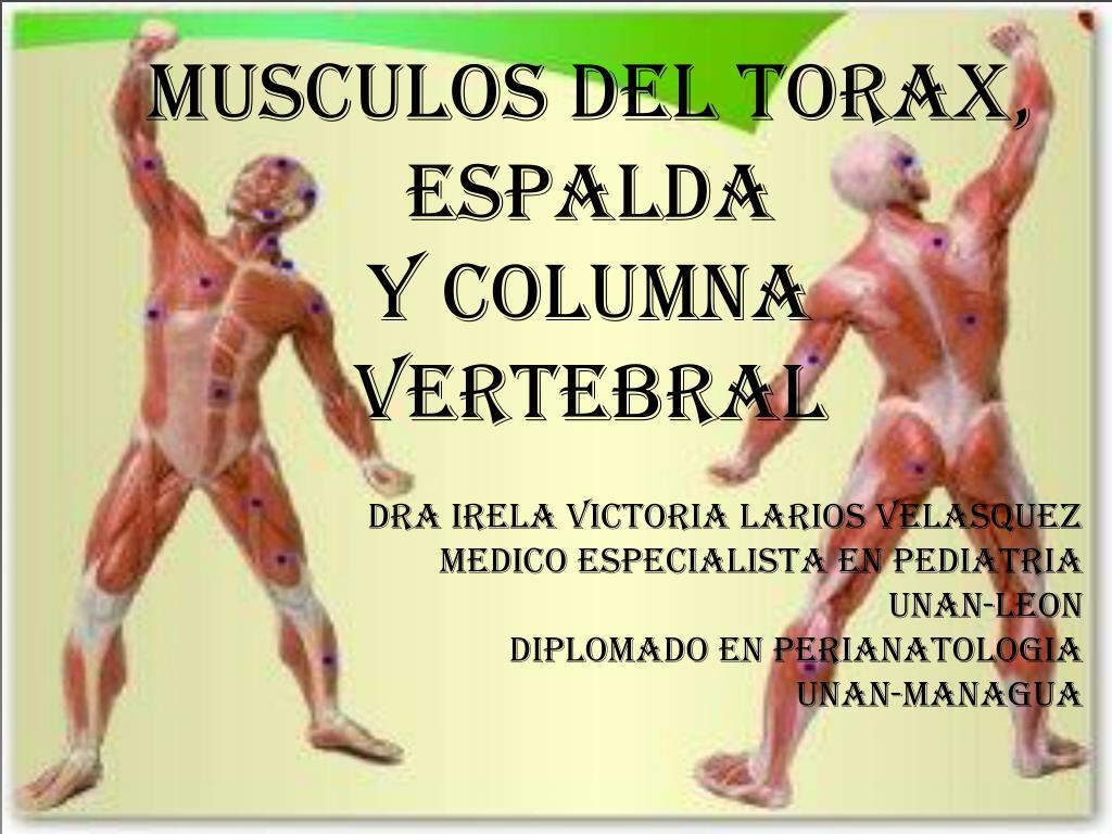 PPT - MUSCULOS DEL TORAX, ESPALDA Y COLUMNA VERTEBRAL PowerPoint ...