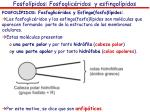 fosfol pidos fosfoglic ridos y esfingol pidos1