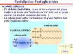 fosfol pidos fosfoglic ridos1