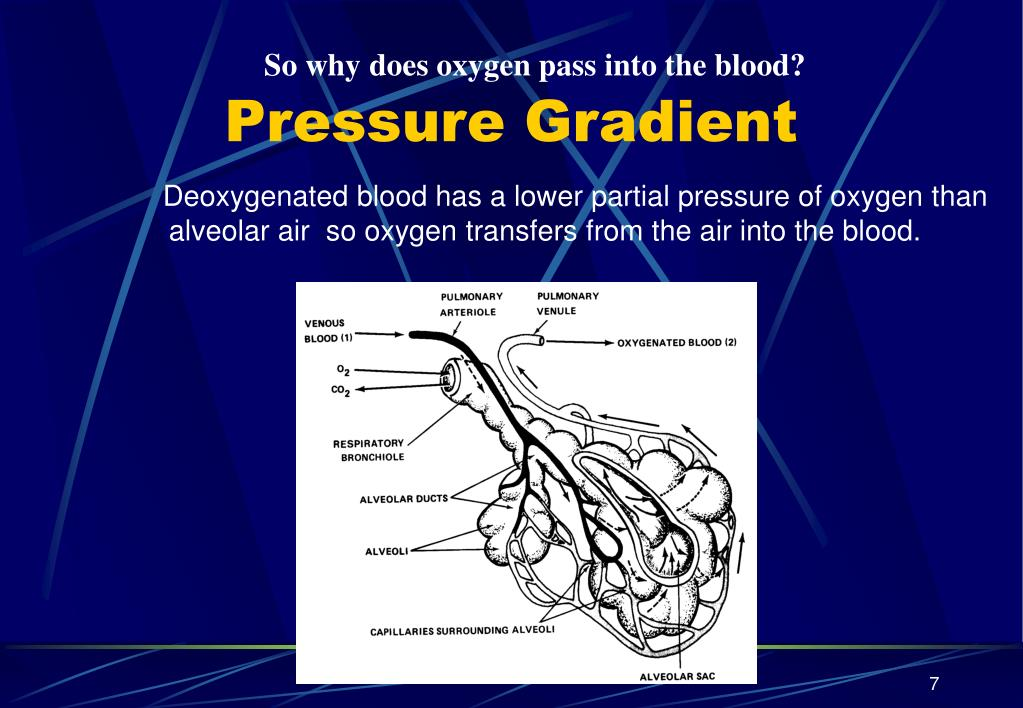So why does oxygen pass into the blood?