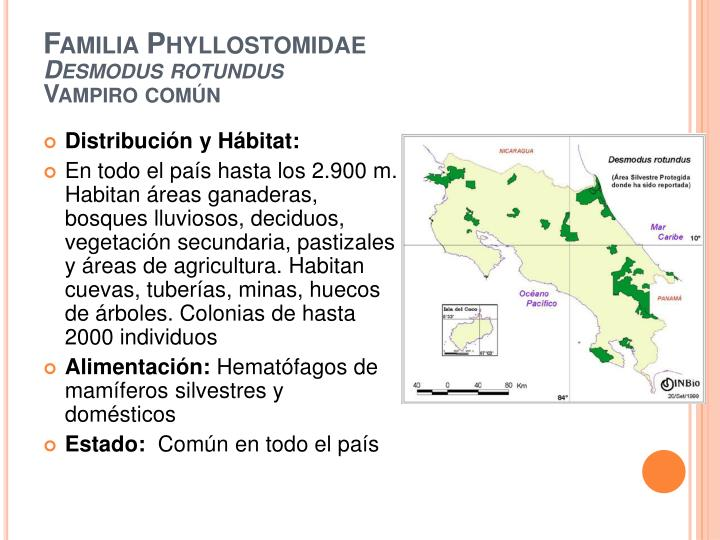 Familia Phyllostomidae