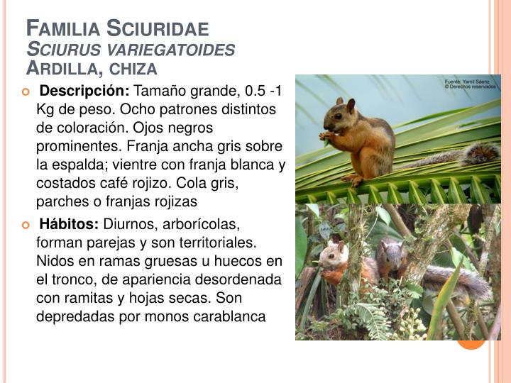 Familia Sciuridae