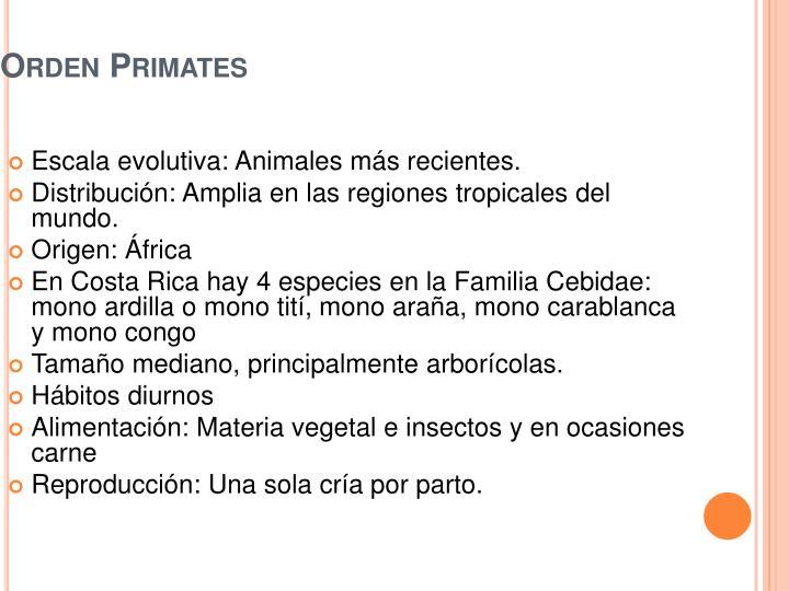 Orden Primates