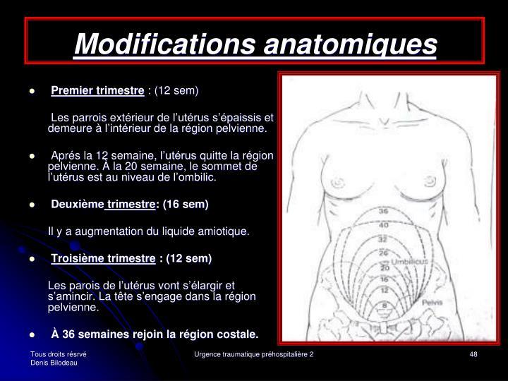 Modifications anatomiques