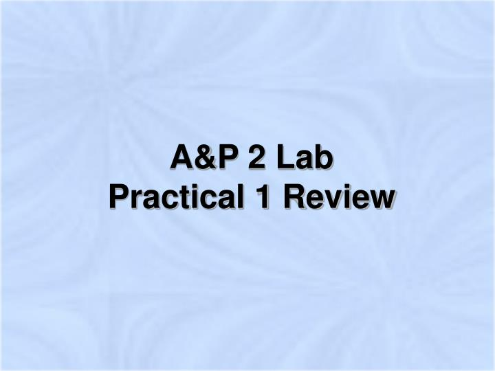 a p 2 lab practical 1 review n.