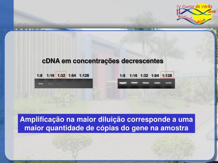 cDNA em concentrações decrescentes