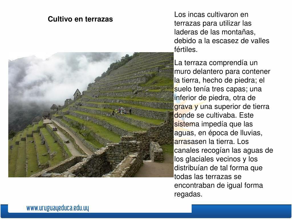 Ppt Las Grandes Civilizaciones Precolombinas Powerpoint