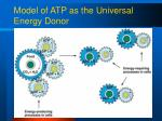 model of atp as the universal energy donor