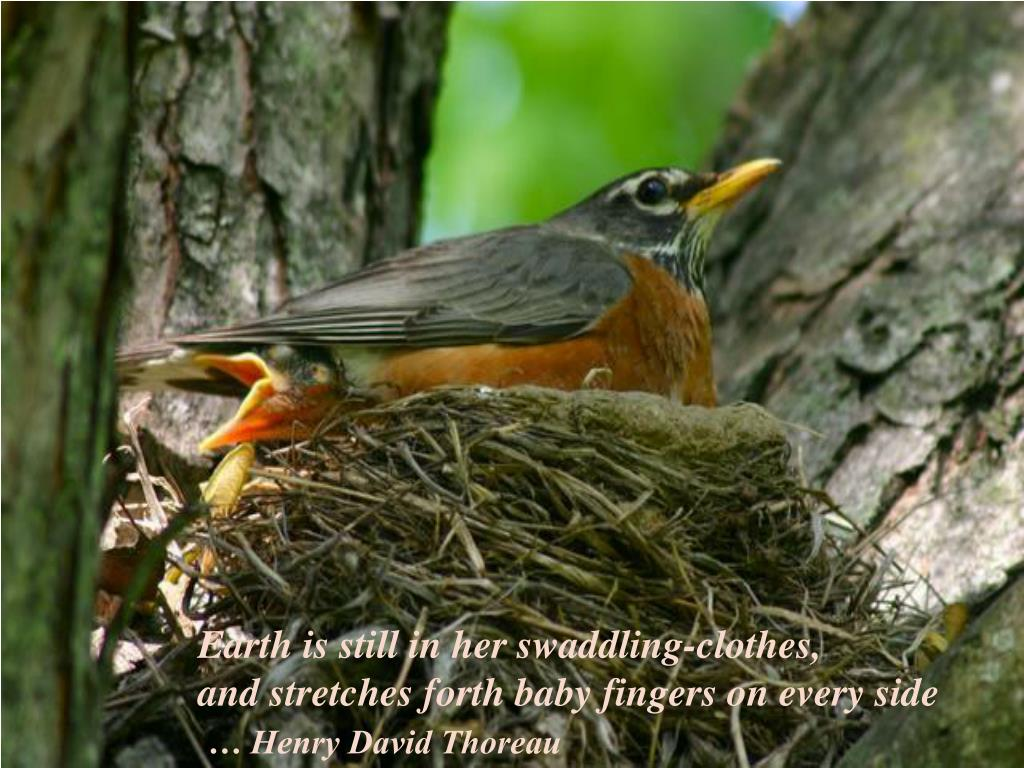 Earth is still in her swaddling-clothes,