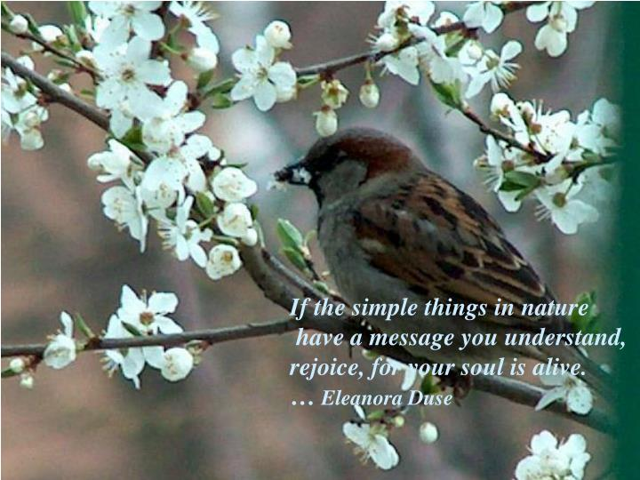 If the simple things in nature