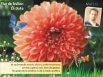 flor de bulbo la dalia