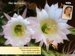 flor de c ctus
