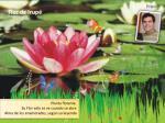 flor de irup