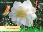 flor de la camelia