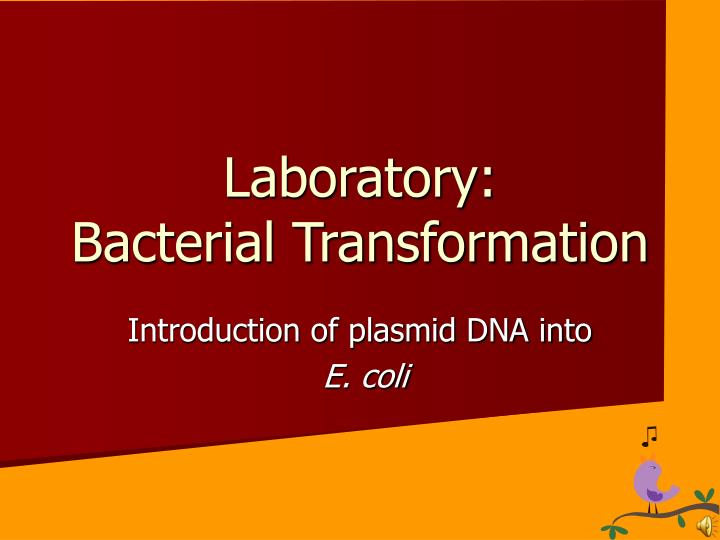 glowing bacteria lab essay example Free essay: abstract some bacteria are able to today's lab, we are transforming bacteria with a gene more about bacteria transformation in biotechnology essay.