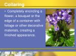 collaring
