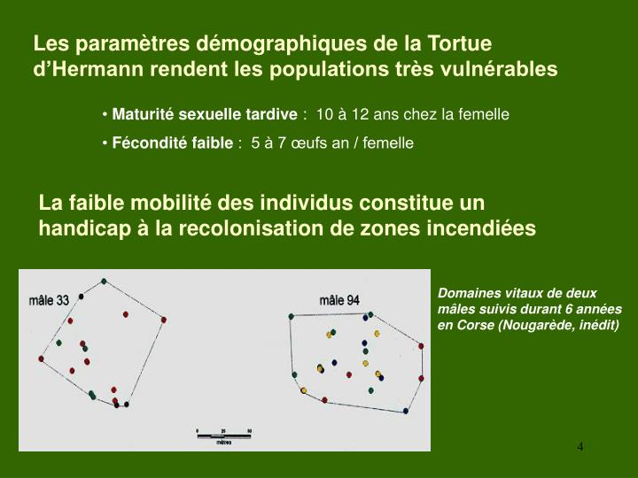 Les paramètres démographiques de la Tortue d'Hermann rendent les populations très vulnérables