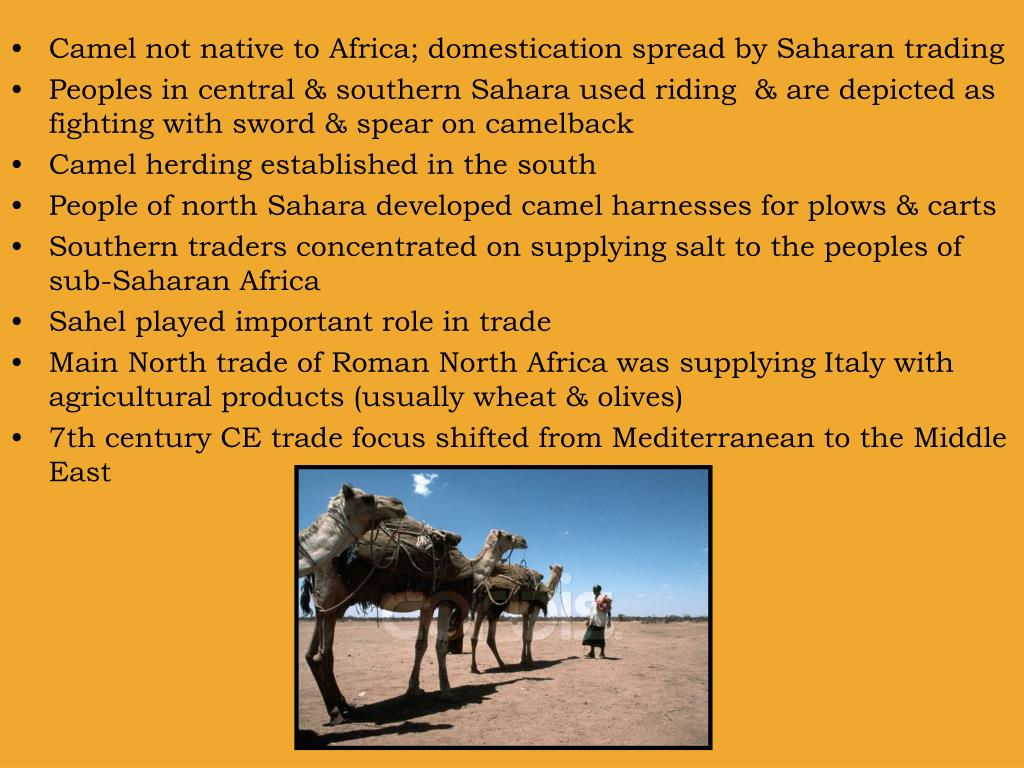 Camel not native to Africa; domestication spread by Saharan trading