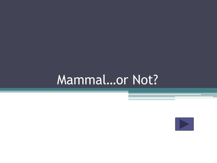 mammal or not n.