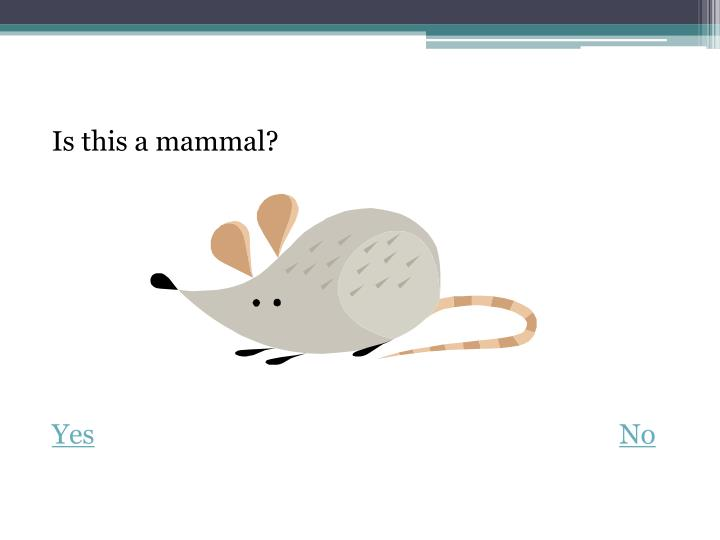 Is this a mammal?