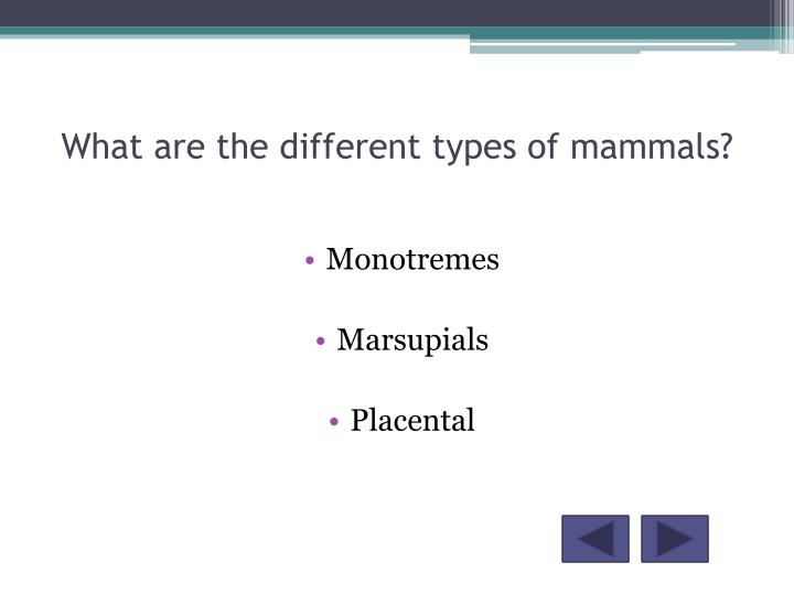 What are the different types of mammals?