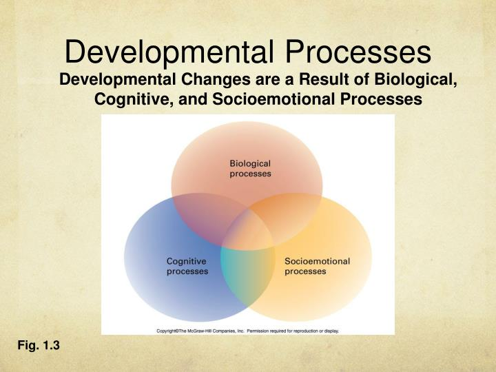 developmental stages physical changes cognitive changes and socioemotional changes A biological changes b cognitive changes c within the physical, cognitive, and socioemotional domains reflects 6 early cognitive development.