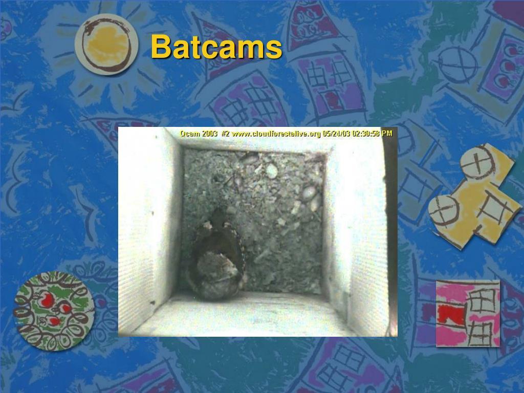 Batcams