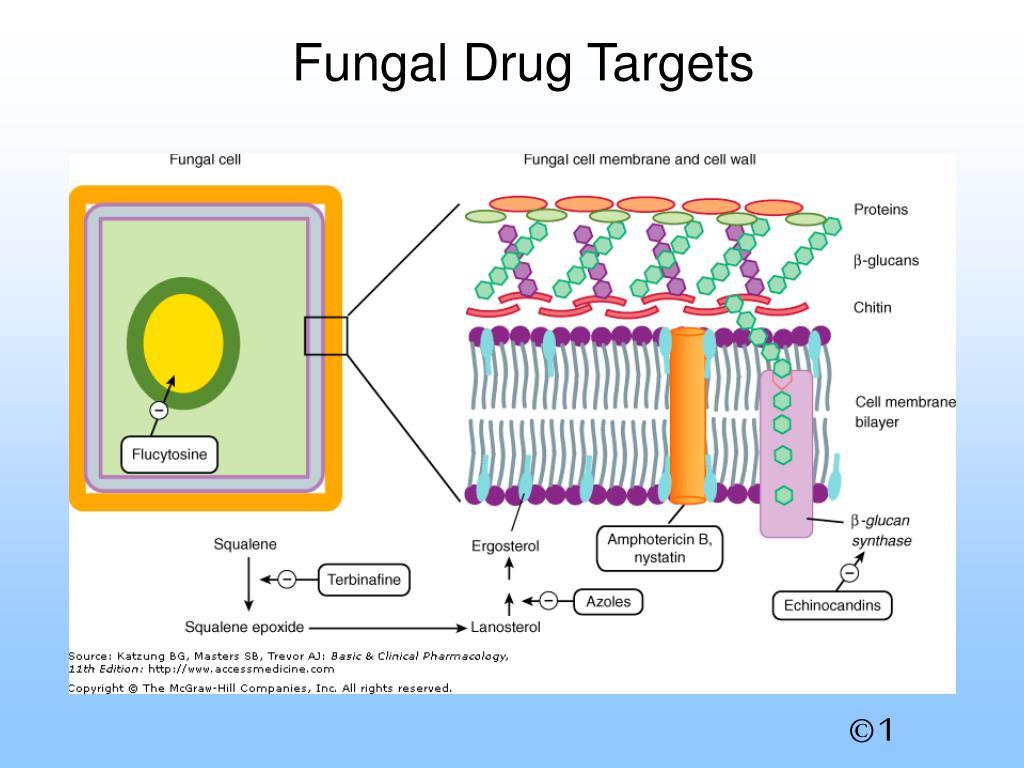 Fungal Drug Targets