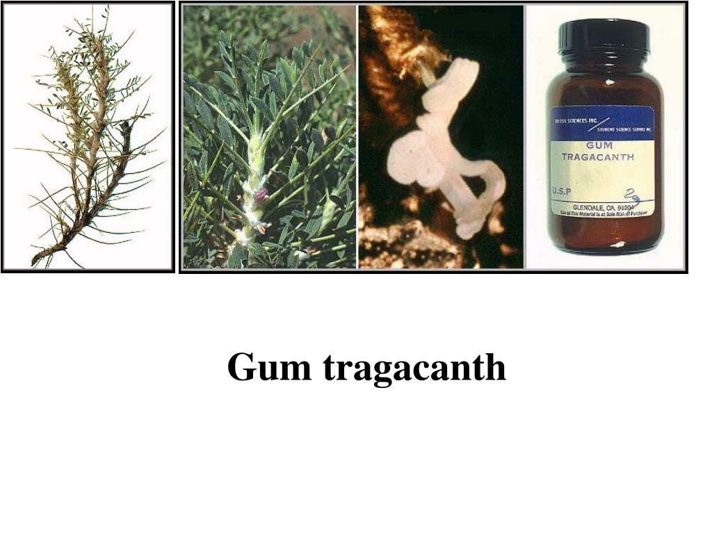 Gum tragacanth