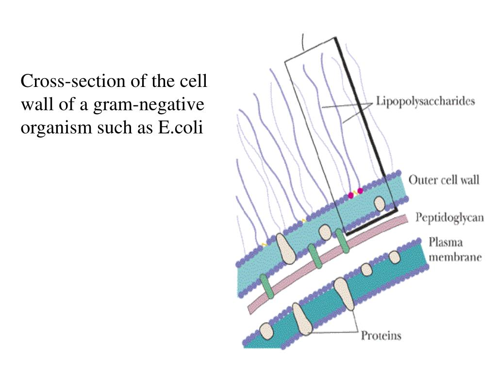 Cross-section of the cell