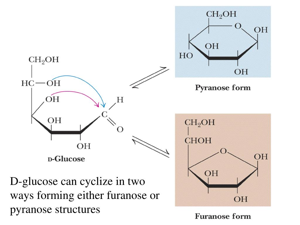 D-glucose can cyclize in two