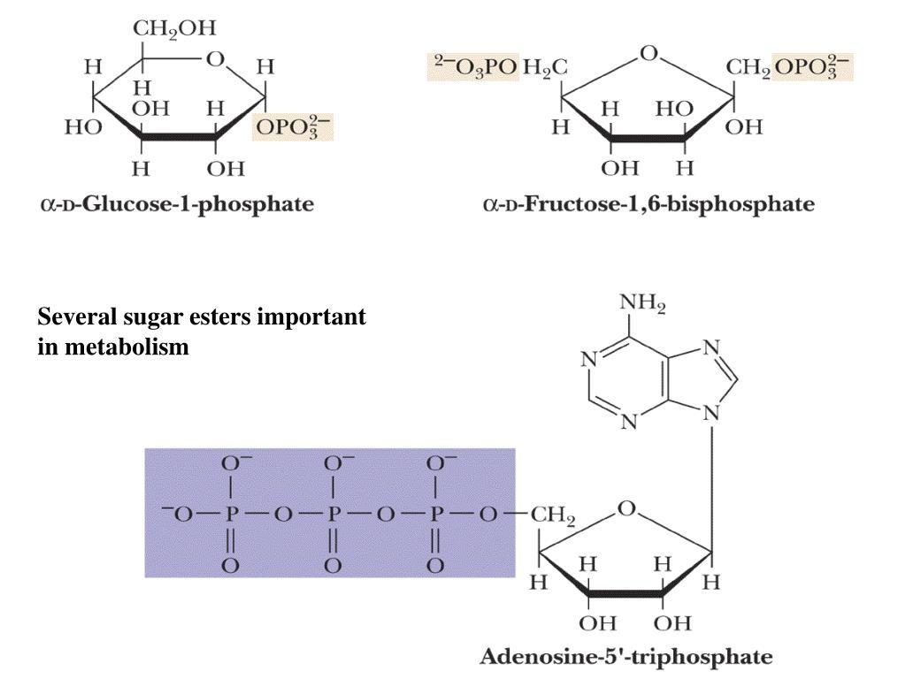 Several sugar esters important
