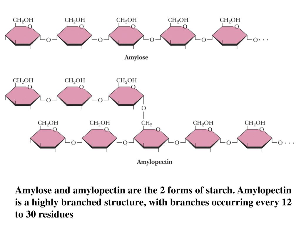 Amylose and amylopectin are the 2 forms of starch. Amylopectin