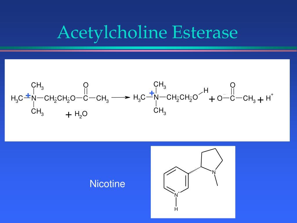 Acetylcholine Esterase