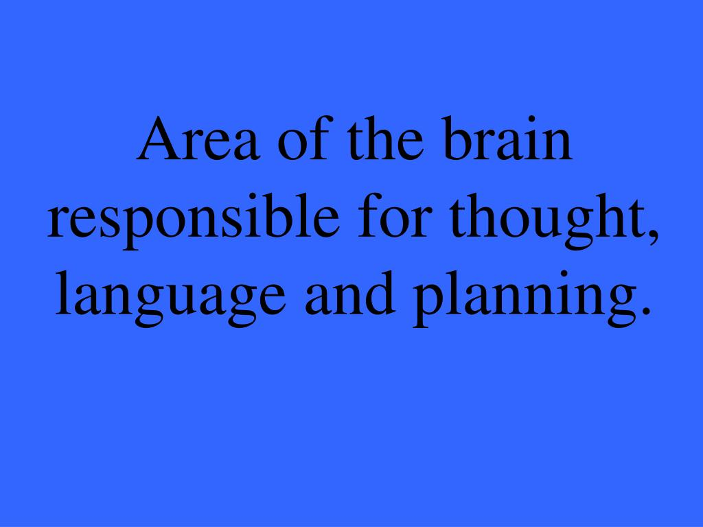 Area of the brain responsible for thought, language and planning.