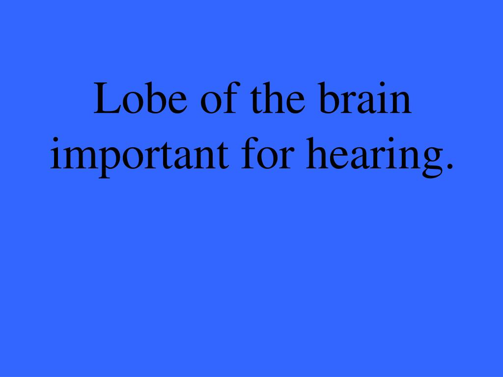 Lobe of the brain