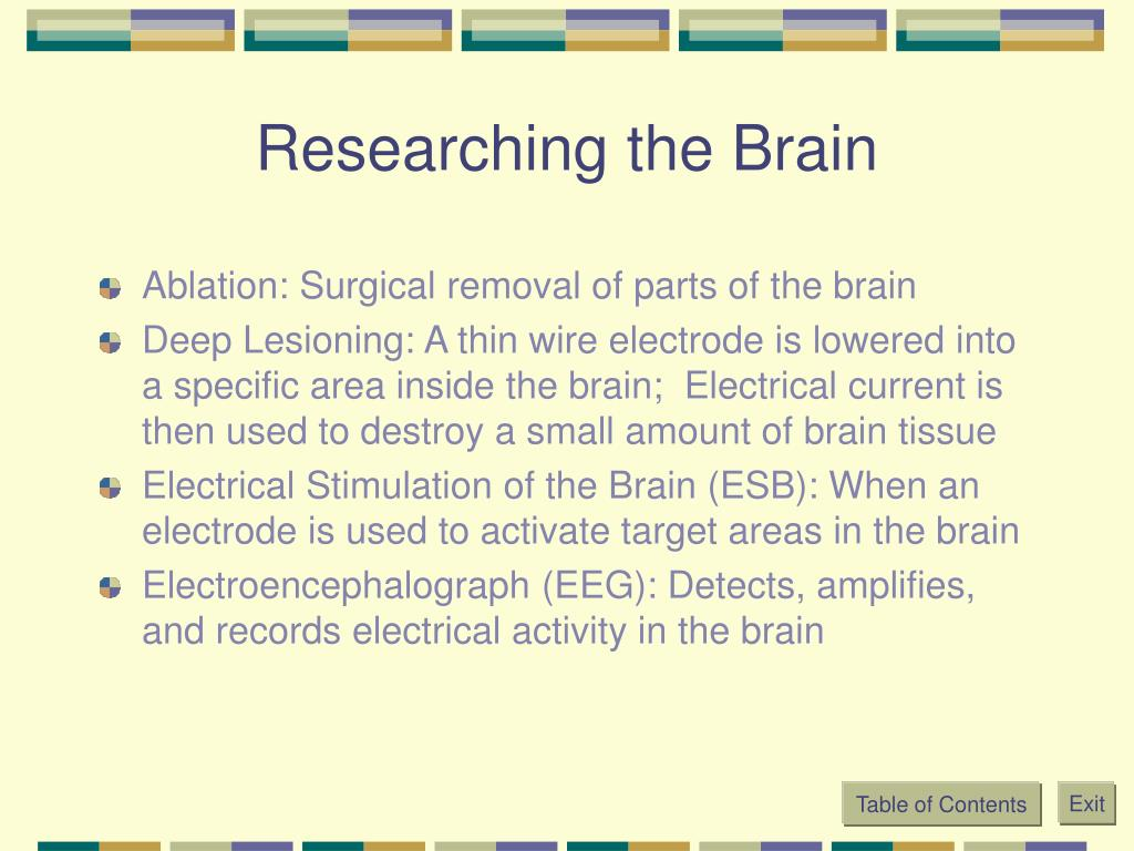 Researching the Brain