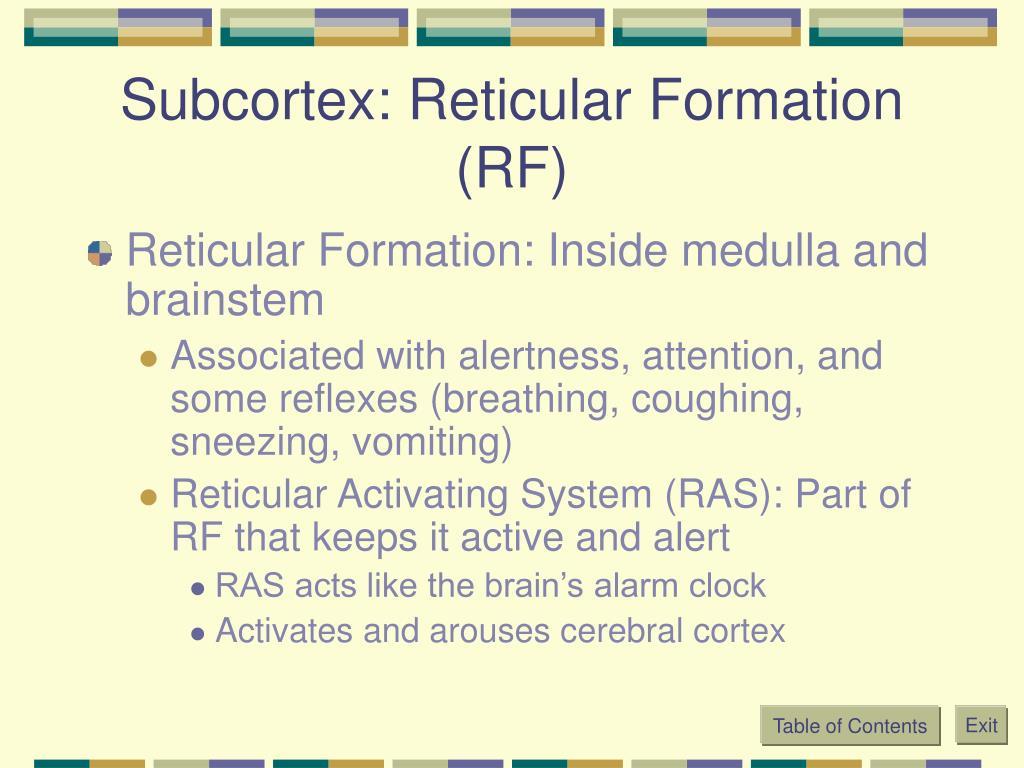 Subcortex: Reticular Formation (RF)
