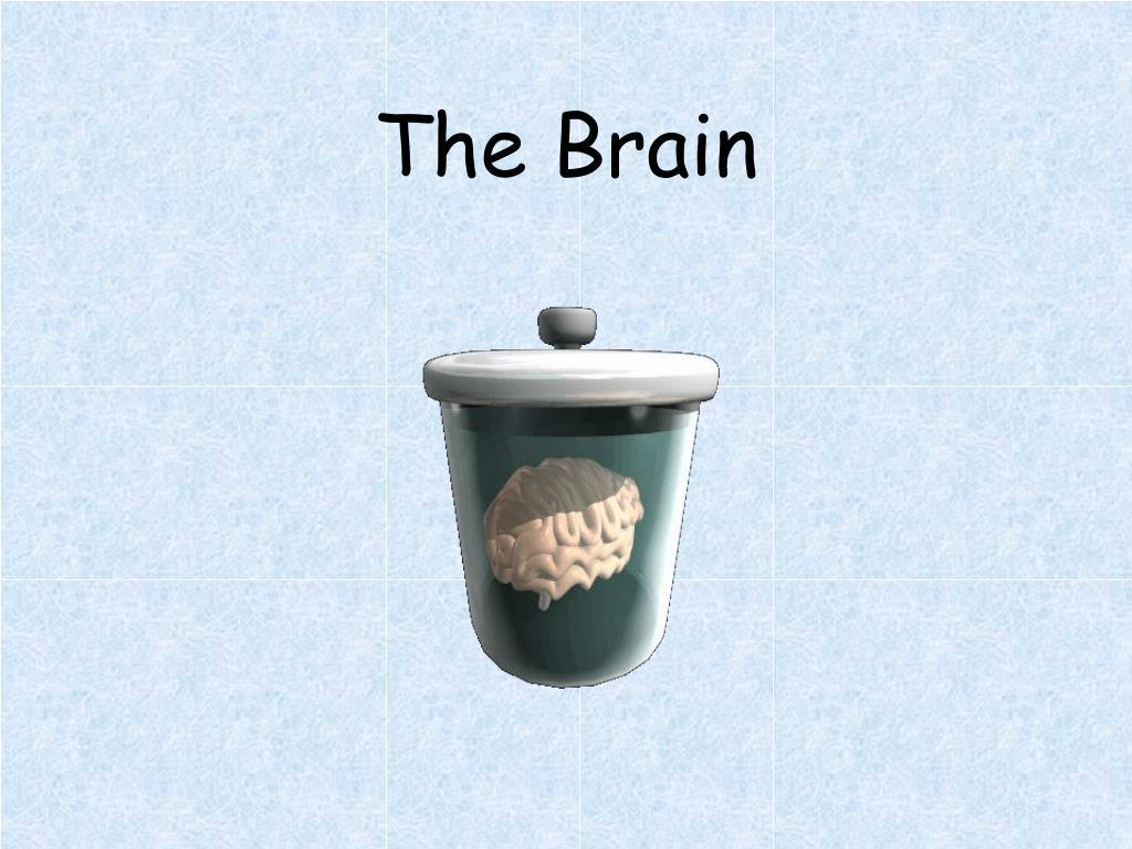 the brain l.