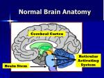 normal brain anatomy6