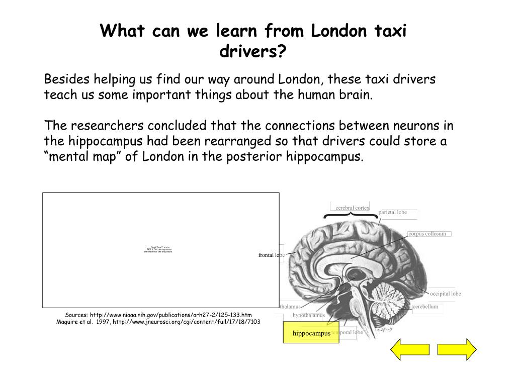 What can we learn from London taxi drivers?