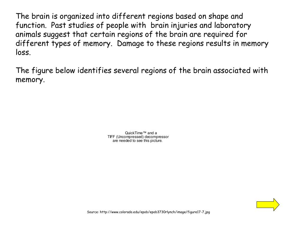 The brain is organized into different regions based on shape and function.  Past studies of people with  brain injuries and laboratory animals suggest that certain regions of the brain are required for different types of memory.  Damage to these regions results in memory loss.