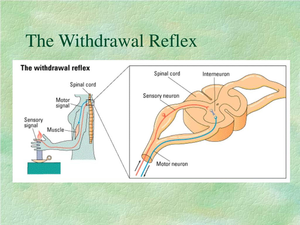 The Withdrawal Reflex