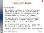 the cerebral cortex20