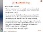 the cerebral cortex22
