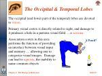 the occipital temporal lobes