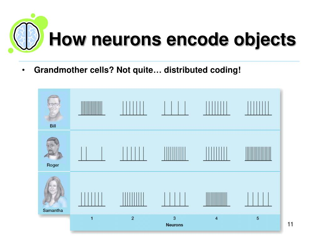 How neurons encode objects