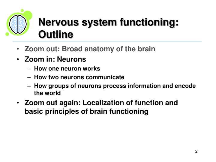 Nervous system functioning outline