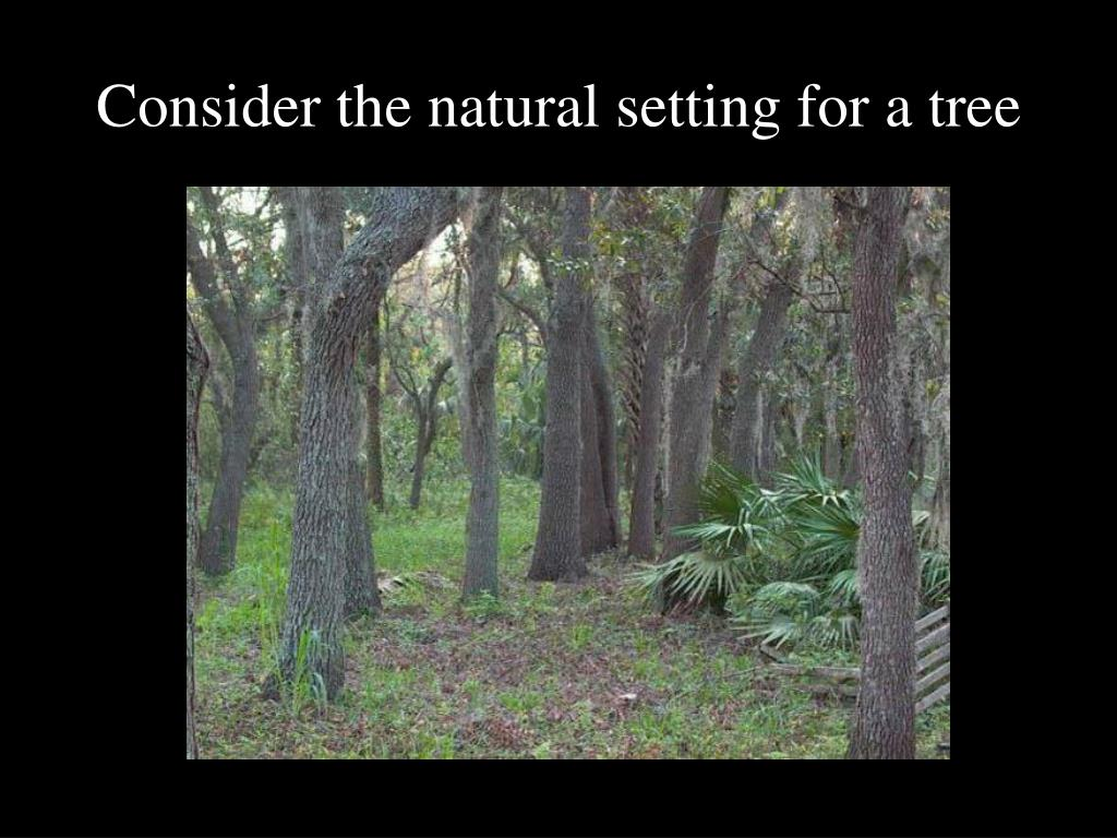 Consider the natural setting for a tree