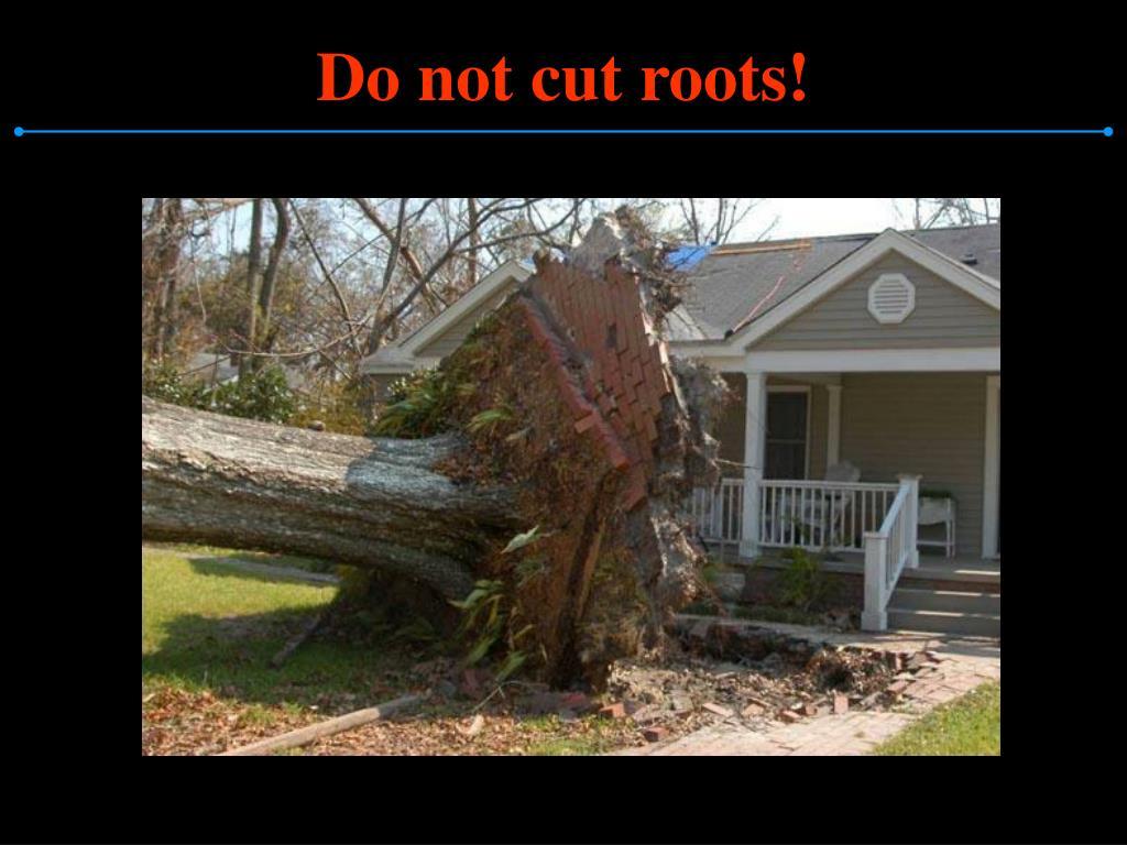Do not cut roots!